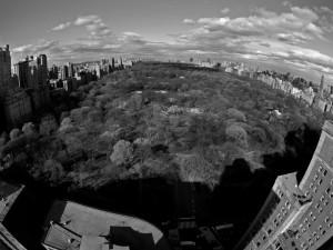 Central.Park-2012