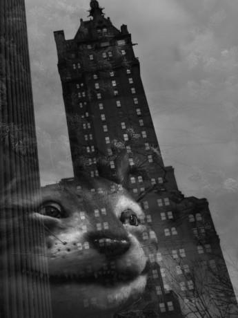 NYC 11. 2011