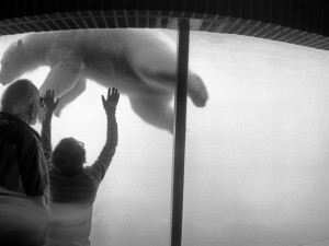 NYC.Zoo.1990