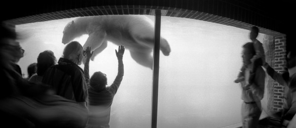 NYC  Zoo. 1991