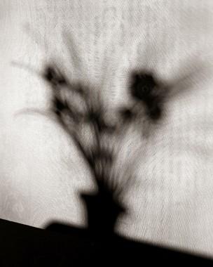 Naturalezas muertas 06