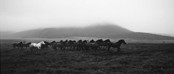 Tropilla. Tierra del Fuego. 1993